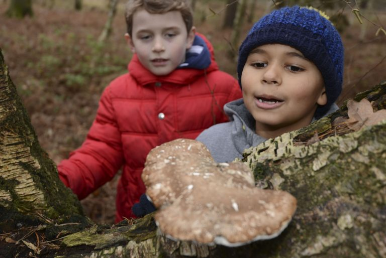 Two boys looking at fungi